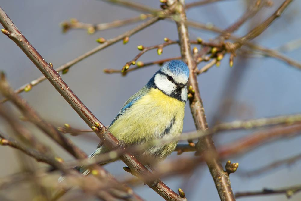 a bird proud to sin in the tree and to show confidence when writing a blog
